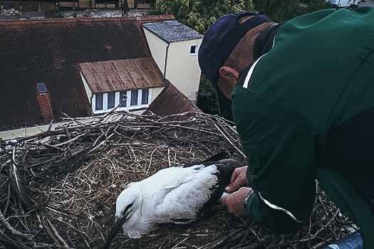 Storch in Reichertshofen registriert